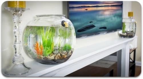 GravityFlow2 幫你自動換水的魚缸