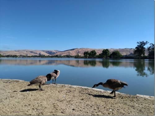 帶著 ASUS ZenFone 3 ZE552KL 去旅行 北加州舊金山隨手拍