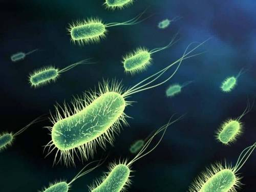 Antoni van Leeuwenhoek發現微生物 良好的習慣能防止不好的微生物威脅自身健康
