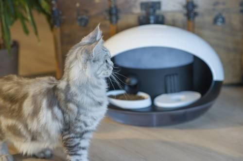貓皇萬歲 請用臣子上貢的 Catspad IoT 產品用餐