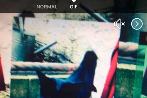 Facebook 為相機加入新功能 可錄製GIF與進行直播!