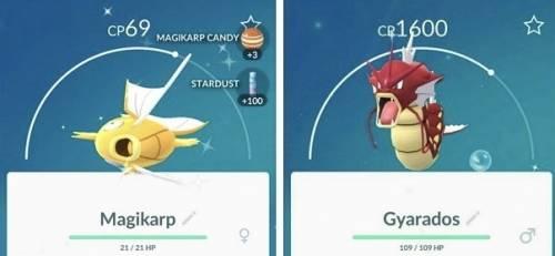 Pokemon GO 色違皮丘 金色鯉魚王加入2KM孵蛋行列