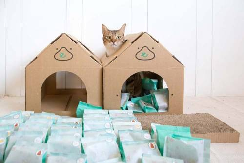 「陪心寵糧」使用在地食材量身規劃 改善寵物營養需求
