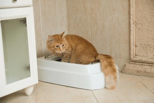 Catolet 自動 貓砂盆 再也不用為了鏟屎勞心費力