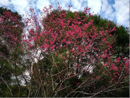 春節哪裡去 台中南投走春景點大蒐集兼亞太電信網路速度測試