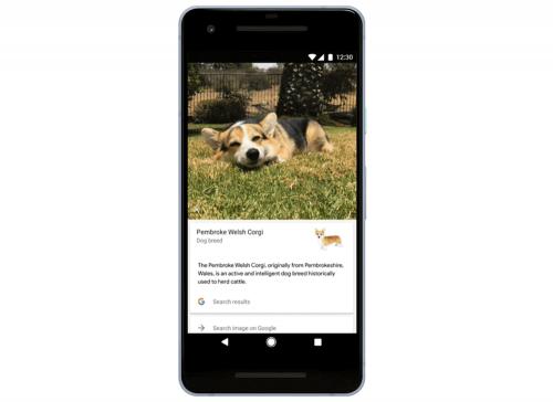 Google Photo 加入新功能 透過人工智慧辨識貓 狗品種