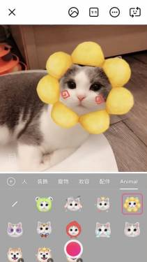 美顏相機 推出「萌寵 AR」 讓毛孩子萌翻你的世界!