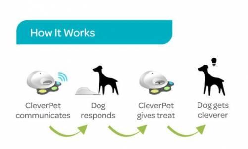 CleverPet讓狗寶貝邊玩邊吃 還能邊做反應訓練