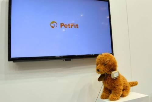 PetFit 寵物專屬健康管理師 愛他,就請好好照顧他