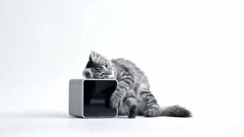 PetCube 讓你隨時與家中寵物寶貝形影不離!