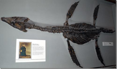 [Google Doodle] Mary Anning 英國古生物學家 215歲誕辰紀念