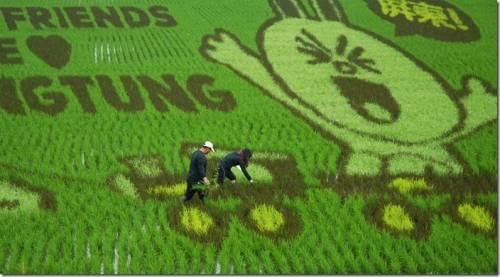 全球第一個LINE彩稻田 3 28 亮麗登場