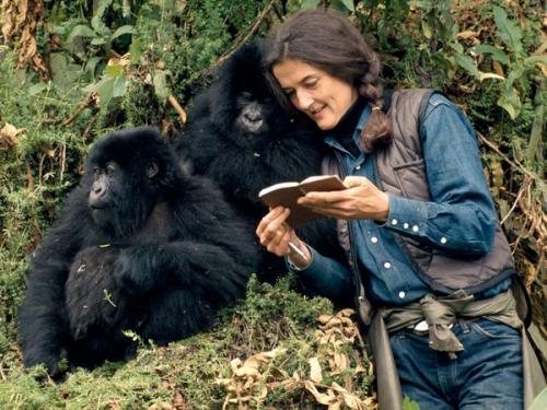 [Google Doodle] Dian Fossey 美國動物學家 82歲冥誕