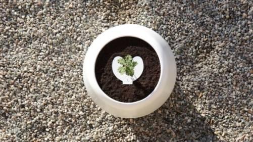 另一種生命的延續 Bios Incube 用親人骨灰罐當智慧盆栽