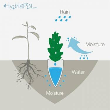 用水滴收集器 Hydria Pot 植物再也養不枯